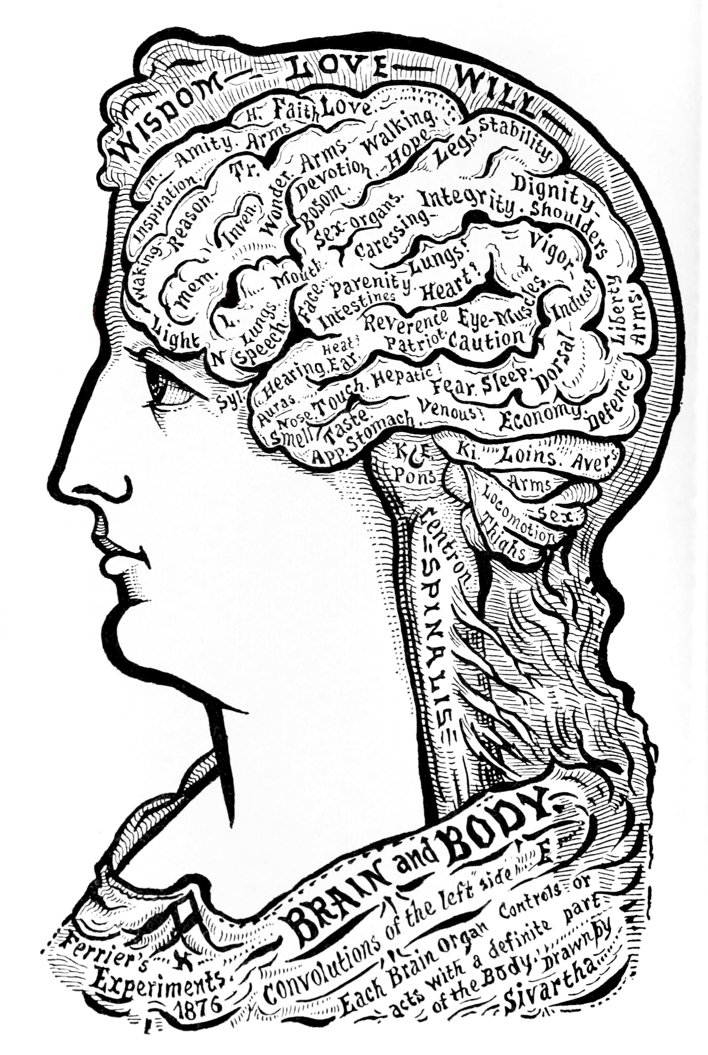 19_brain_and_body.jpg