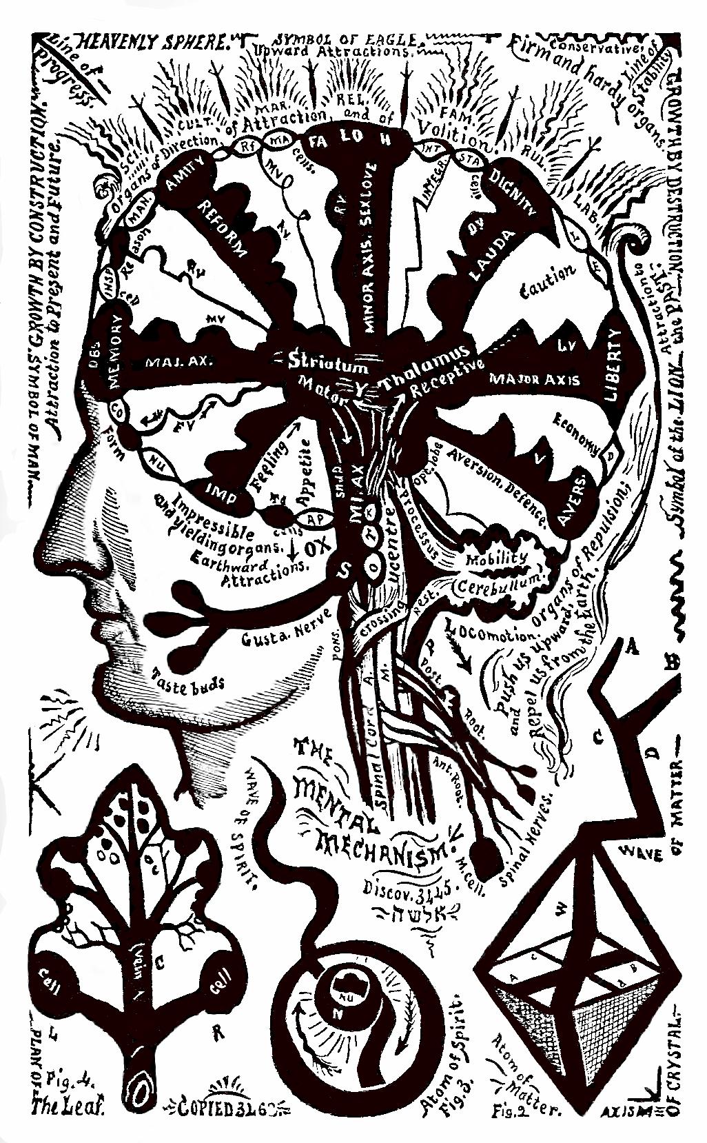 21_plan_of_the_brain_-_israel.jpg