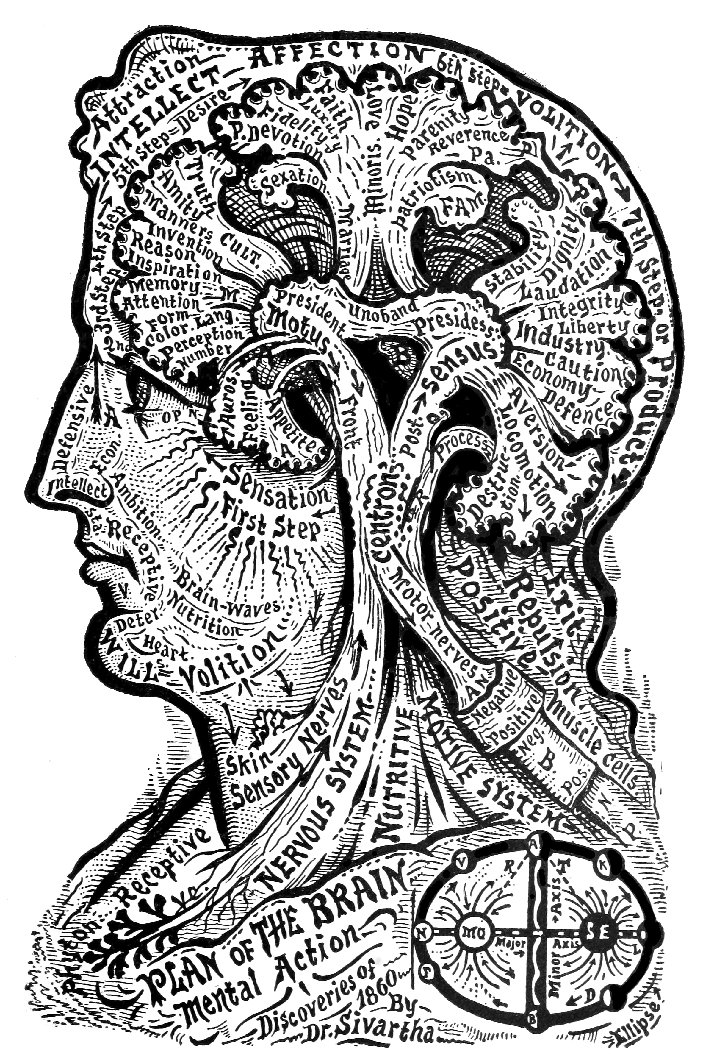 23_plan_of_the_brain.jpg