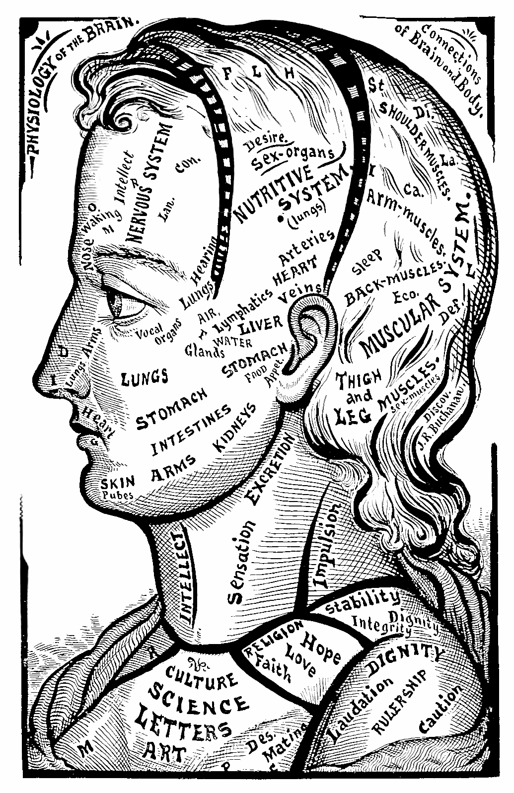 36_physiology_of_the._brain_on_the_face.jpg