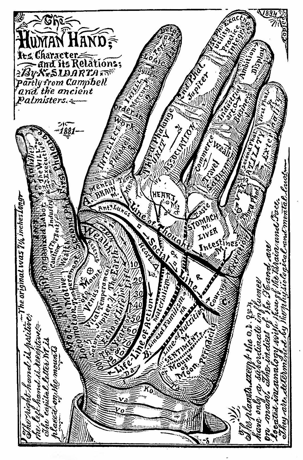 53_human_hand_1884.jpg